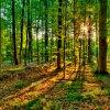 Белорусский лес вскоре станут полностью перерабатывать в изделия с высокой добав