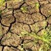 Засуха в Англии заставляет жителей страны экономить воду